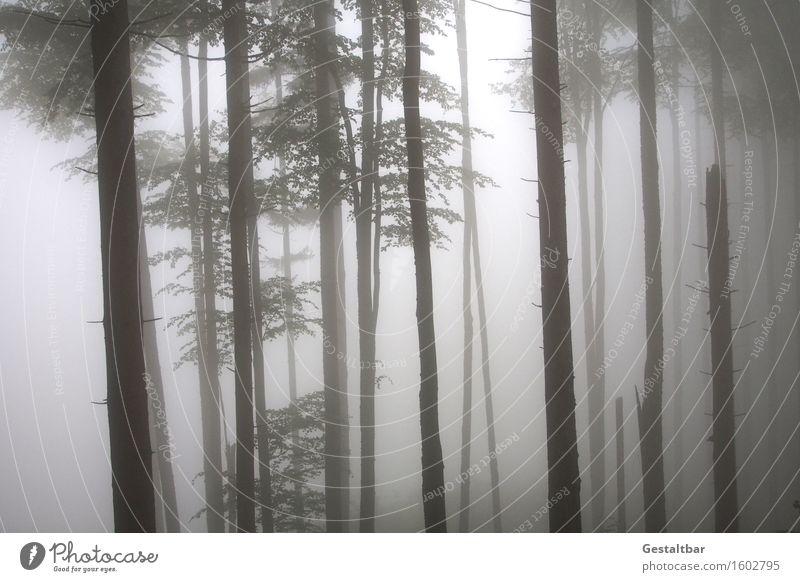 REMIXCASE | Seltsam, im Nebel zu wandern! Natur Landschaft Frühling Baum Sträucher Wald Irrweg sichtbar unsichtbar Einsamkeit einfach ruhig Trauer Angst Pause