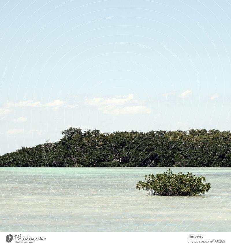 david & goliath Wasser Himmel Meer Sommer Ferien & Urlaub & Reisen Wolken groß Insel Tourismus Reisefotografie Botanik Paradies Karibisches Meer Kleine Antillen Südamerika