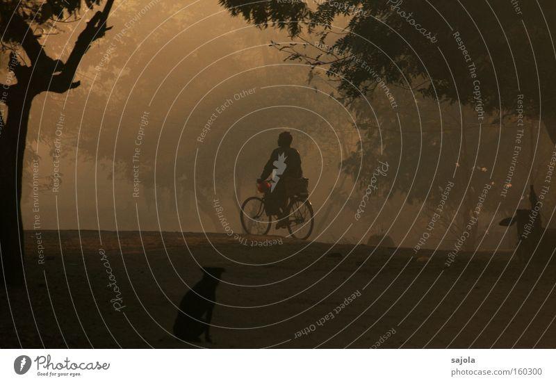 radfahrer im morgengrauen Mensch Mann Baum Hund Zufriedenheit Stimmung Fahrrad Erwachsene Nebel maskulin Verkehr ästhetisch Asien Fahrradfahren Verkehrsmittel