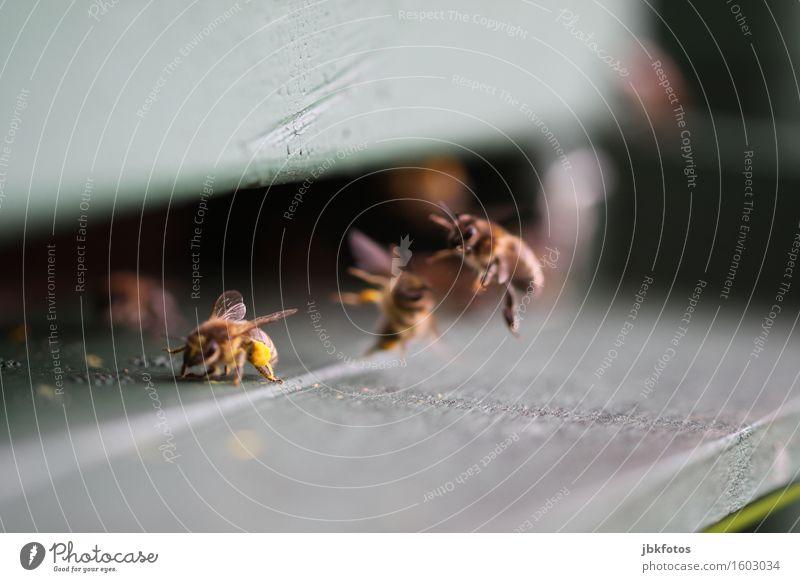 Bienen Lebensmittel Ernährung Lifestyle Glück Gesundheit Freizeit & Hobby Umwelt Natur Tier Schwarm ästhetisch Freundlichkeit trendy saftig Bienenstock Imkerei