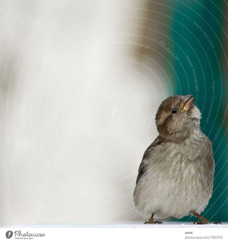 Flausch-Murmel Einsamkeit Tier lustig klein Vogel wild Wildtier authentisch Fröhlichkeit Feder niedlich weich Lebensfreude Neugier tierisch frech