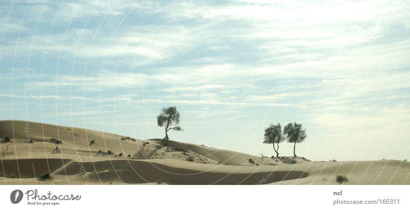 Wüstenmeer Landschaft Sand Sonne Himmel Baum heiß Schatten staubig Dürre Dubai Ferne kahl Unendlichkeit Erde verfallen Asien