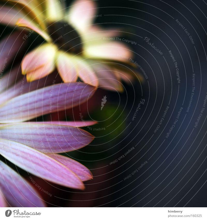 schnittblumen Natur Pflanze Blume Frühling Blüte Hintergrundbild frisch Blumenstrauß Botanik Floristik Gartenbau Zimmerpflanze
