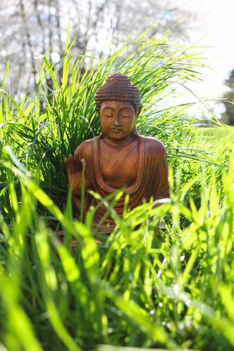 buddha Mensch Pflanze ruhig Leben Wiese Gras Holz Garten Dekoration & Verzierung sitzen Schönes Wetter Hoffnung Glaube Gelassenheit Meditation Statue
