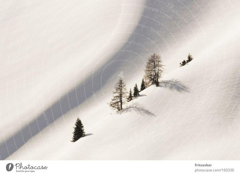 Seilschaft Berge u. Gebirge Winter Baum Steigung weiß Einsamkeit diagonal sanft Schnee