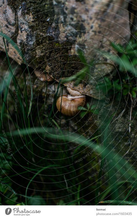 Schneckenwetter Natur schön Tier dunkel Umwelt Wand Herbst Gras Mauer Wildtier sitzen authentisch rund verstecken hängen Geborgenheit