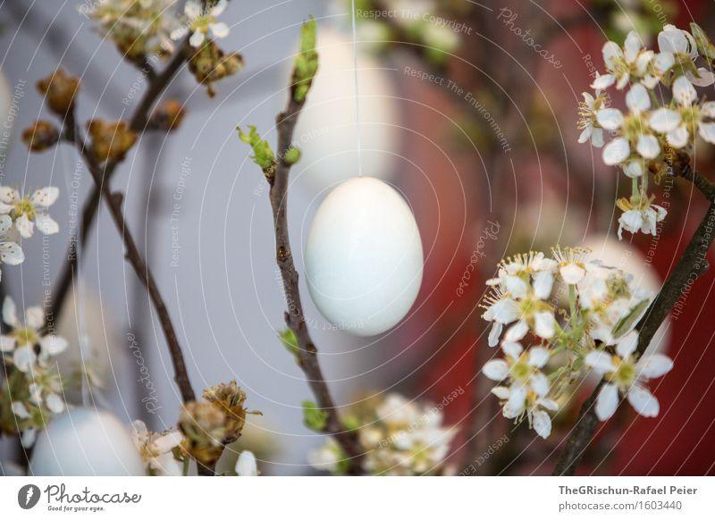Easter Egg Feste & Feiern Ostern blau grau grün rot schwarz weiß Ei fest Osternest Osterei Zweig Blüte osterbaum Blühend mehrfarbig Farbfoto Innenaufnahme