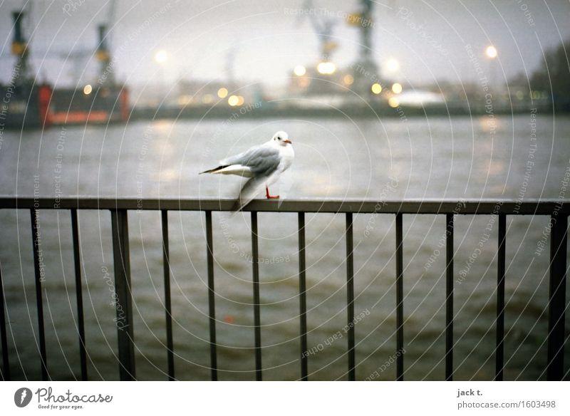 Hafen 2 Wasser ruhig Tier Gefühle Stimmung Vogel Möwe Hafenstadt