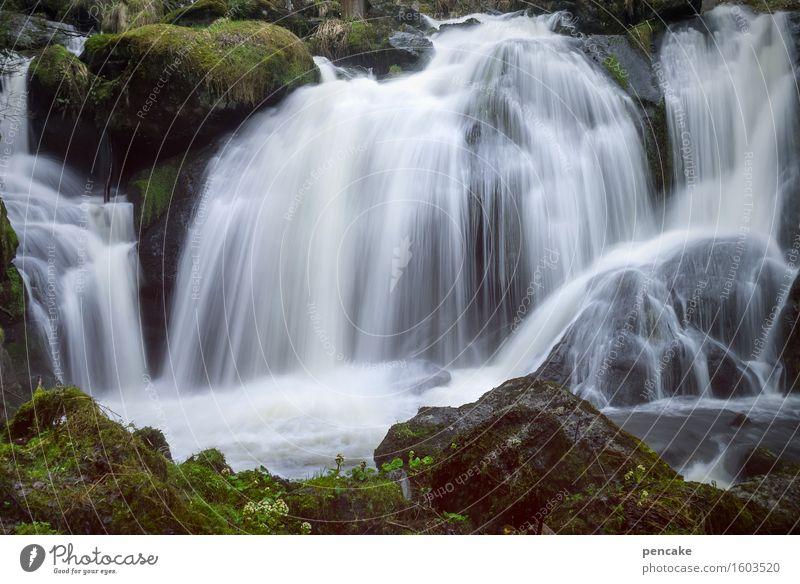 triberg Natur Landschaft Urelemente Wasser Frühling Wald Felsen Wasserfall Triberg ästhetisch Bekanntheit frisch Zusammensein schön Rauschen Langzeitbelichtung