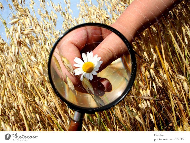 Naturforscher Natur Hand Sommer Blume Freude Feld Finger Neugier Getreide Landwirtschaft Wissenschaften Ernte Gänseblümchen Interesse Lupe forschen