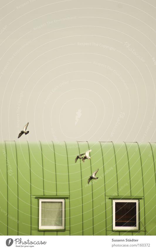 4 Himmel Haus Leben Fenster Freiheit Vogel Metall Architektur Wohnung fliegen Luftverkehr Dach Flügel Metallwaren Häusliches Leben
