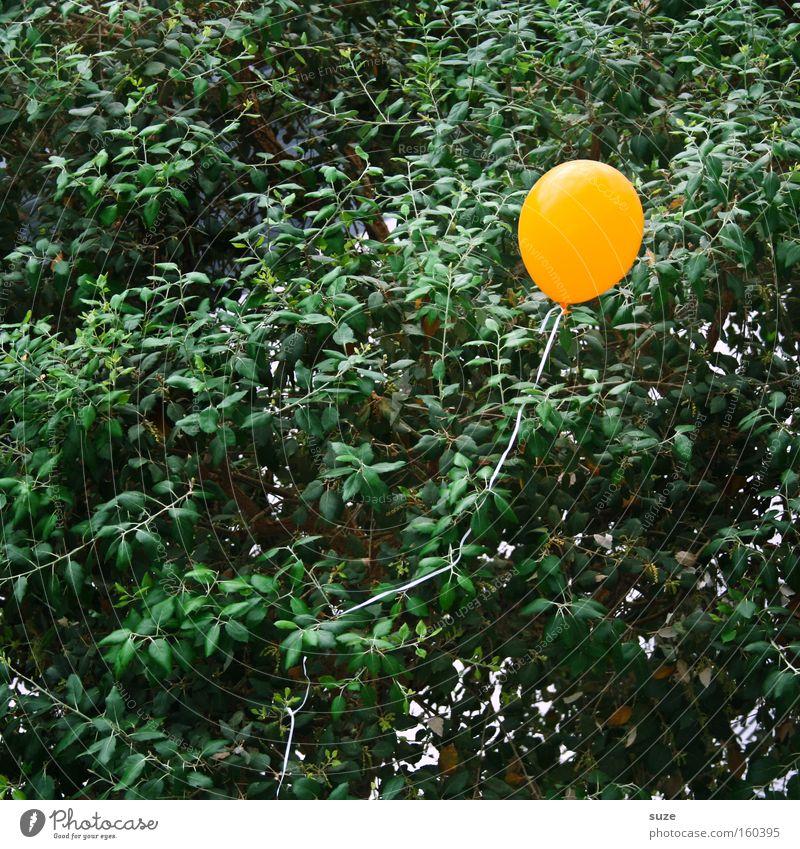 Einer von 99 Baum Einsamkeit gelb Luft Feste & Feiern Kindheit fliegen Geburtstag Luftverkehr Dekoration & Verzierung Luftballon blasen Platzangst Gummi platzen