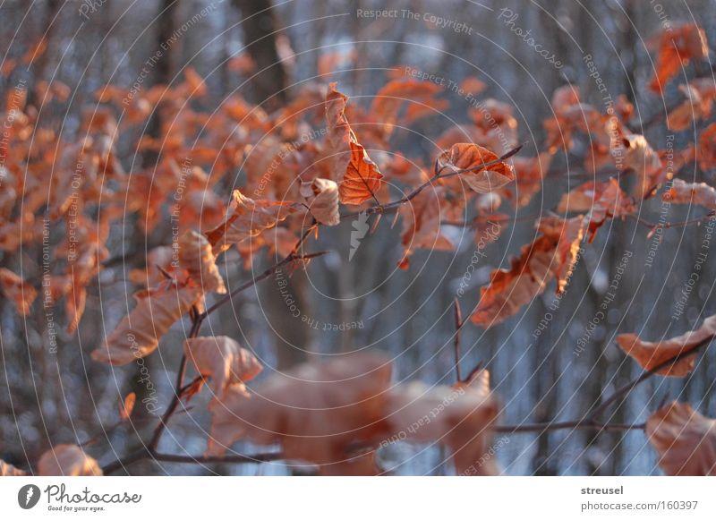 Winterwald Natur alt Baum Blatt ruhig Tier Winter Wald Umwelt Traurigkeit natürlich Tod braun warten Vergänglichkeit Wandel & Veränderung
