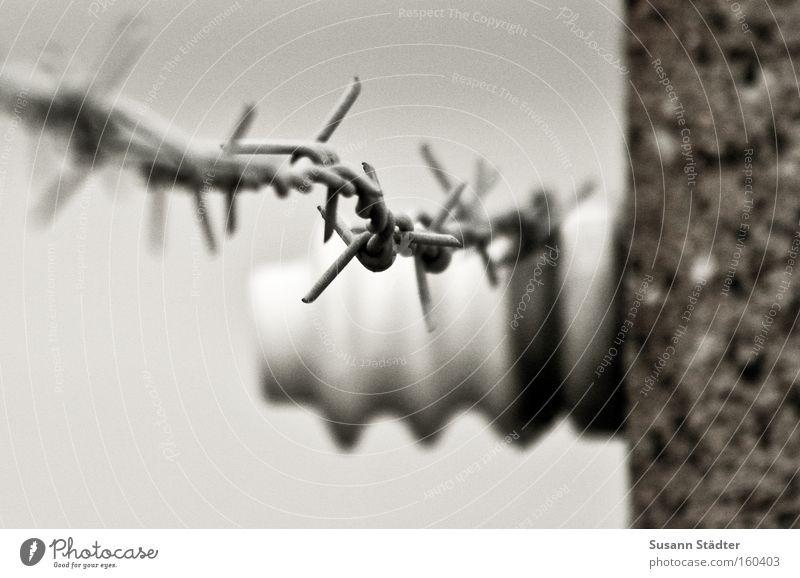 unvergessen Konzentrationslager Buchenwald Angst Tod Mord Stacheldraht Rost Metall Metallwaren Stein Zaun Schutz Sicherheit erinnern Denkmal Detailaufnahme