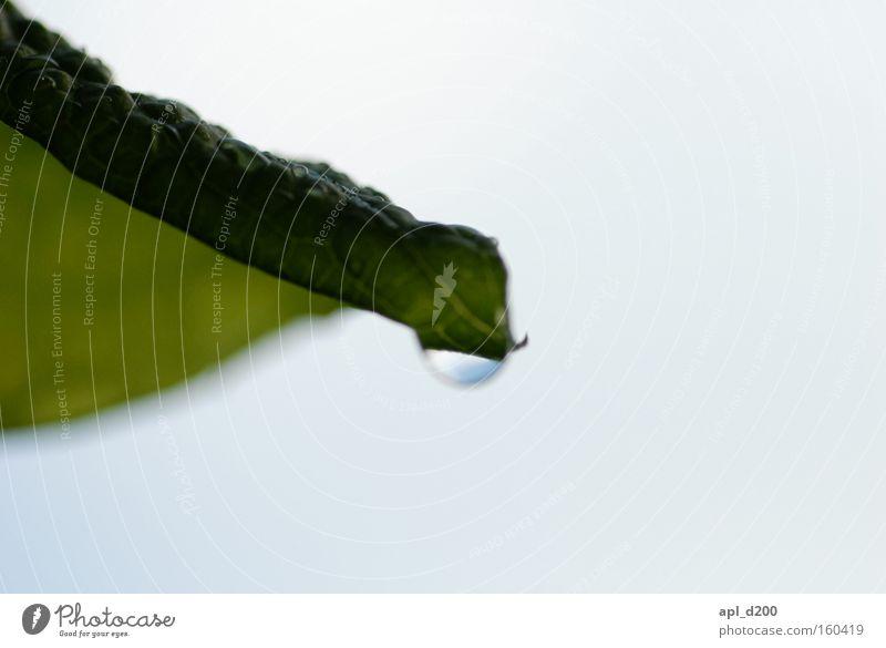 sag mal weinst du oder ist es der regen Baum grün Blatt Regen Wassertropfen Sträucher graue Wolken