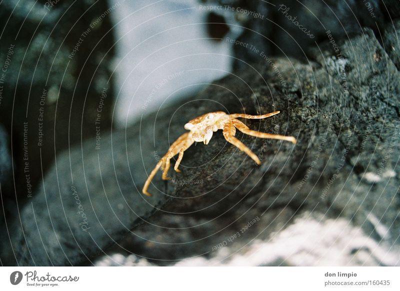 krustentier Natur Tod Stein analog Lebewesen getrocknet Krebstier Krabbe Krustentier