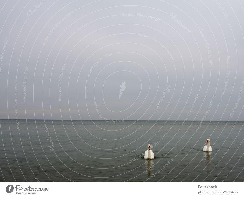 Wenig ist Meer ruhig Wasser Himmel Horizont Ostsee See Vogel Schwan 2 Tier Tierpaar Zusammensein loyal Freundschaft Treue Gelassenheit bescheiden Einsamkeit