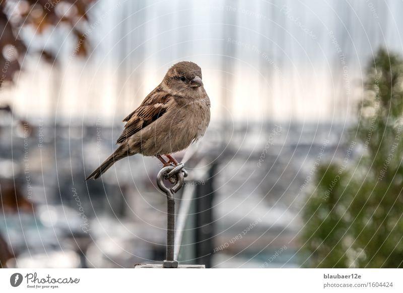Spatz Tier Wildtier Vogel Tiergesicht 1 Freundlichkeit maritim Farbfoto Außenaufnahme Menschenleer Tierporträt Blick in die Kamera