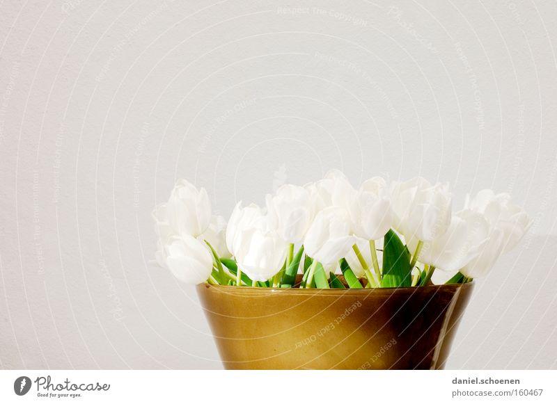 Frühling vor grauer Wand weiß Blume braun Geburtstag Dekoration & Verzierung Blumenstrauß Tulpe Vase Keramik Jubiläum
