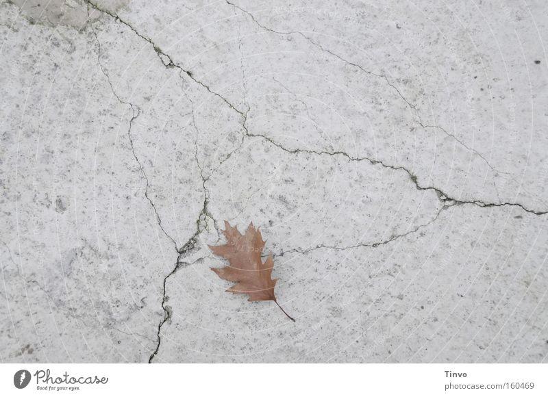 Tage wie dieser... Beton Betonboden Riss Blatt Einsamkeit Trauer verlieren einzeln Single trist trüb Vergänglichkeit Ende Traurigkeit ruhig