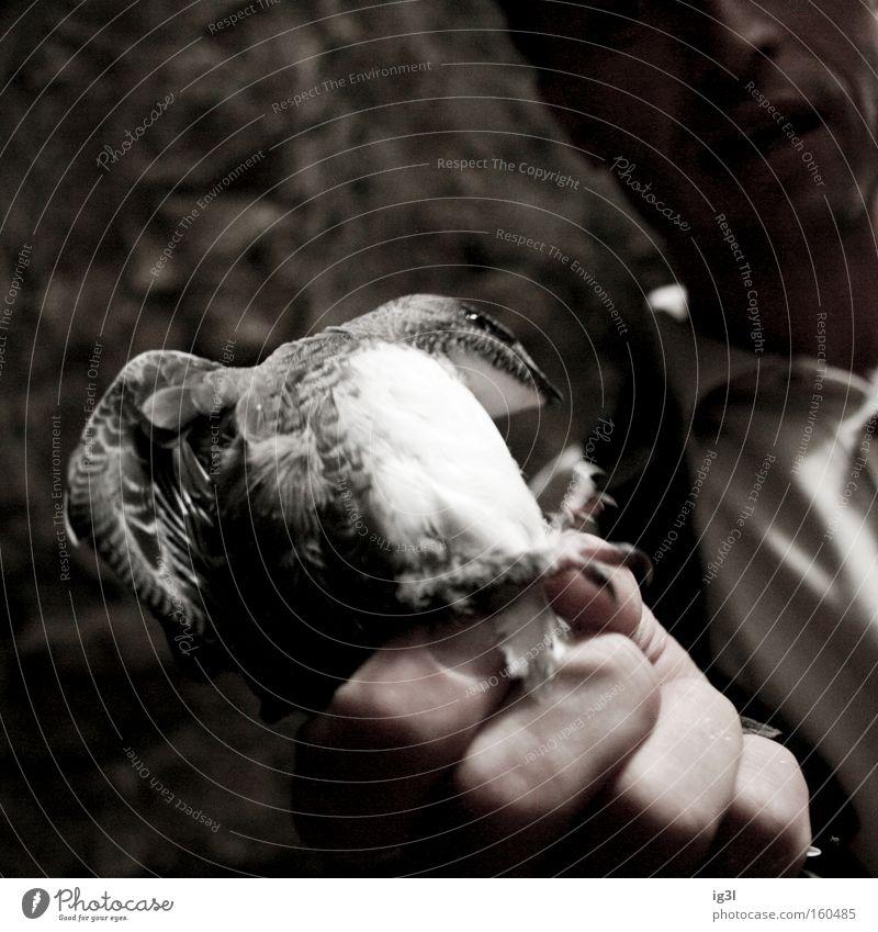 ..als die Taube auf dem Dach Natur Hand Glück Zufriedenheit Vogel Wachstum Körperhaltung Zoo Tragfläche Lebewesen Umzug (Wohnungswechsel) Pfleger Fleisch Biologie Umweltschutz