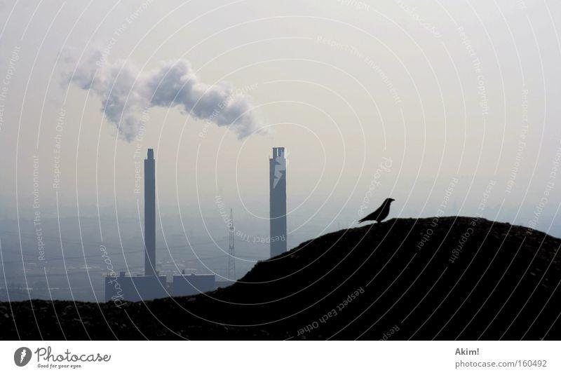 Krabat auf Reisen! Rabenvögel Halde Industriefotografie Ruhrgebiet Bergbau Natur Außenaufnahme Stromkraftwerke Heizkraftwerk Umweltschutz Nostalgie Wut Ärger