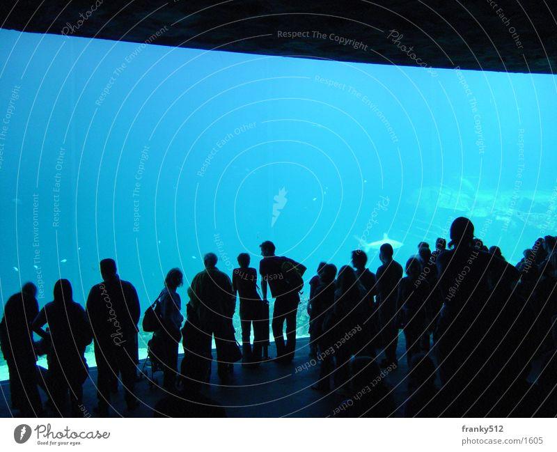 Unterwasserwelt Mensch Wasser Fisch Zoo Aquarium Niederlande