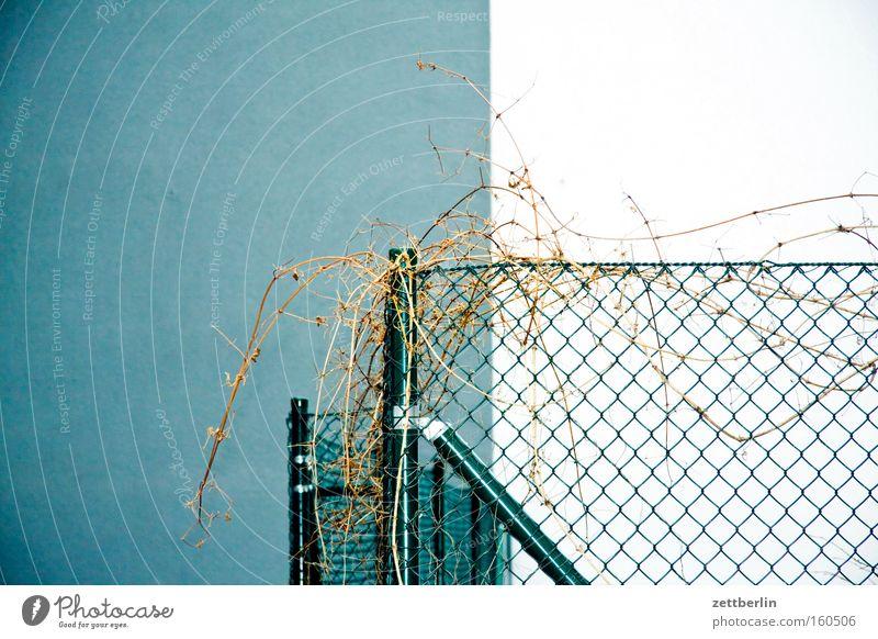 Zaun Maschendraht Maschendrahtzaun Gitter Barriere geschlossen Garten Grundstück Grenze Ecke zweifarbig Wand Ranke Pflanze Sträucher Detailaufnahme