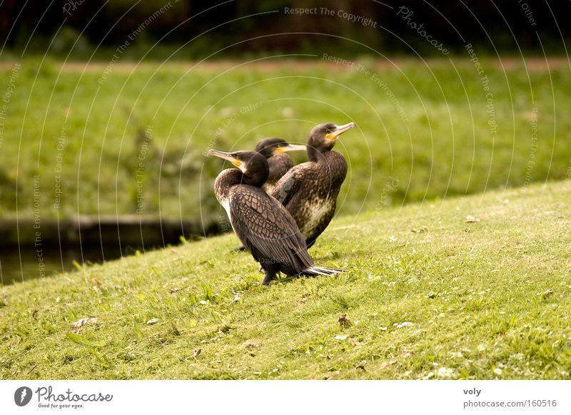 Kormorane Wasser grün Sommer ruhig Tier Farbe Landschaft Vogel