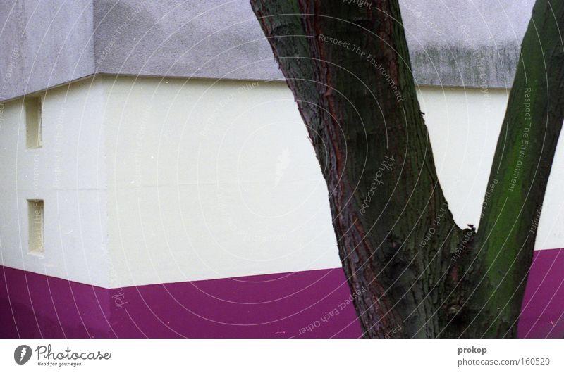 Fallobst Baum Baumstamm Farbe Beton Natur Fenster Mauer vergleichen Kontrast Gegenteil Widerspruch widersprüchlich gefangen Freiheit Detailaufnahme Schwäche