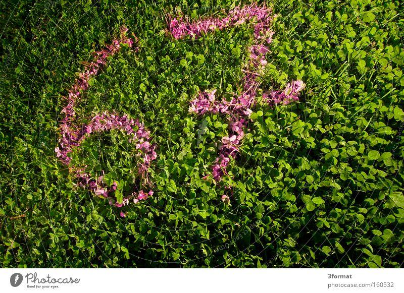 67 64 Ziffern & Zahlen zählen Klee Geburtstag Graffiti Medien siebenundsechzig addieren Wiese Rasen Gras Farbe pink grün schreiben geschrieben sprühen Farbdose