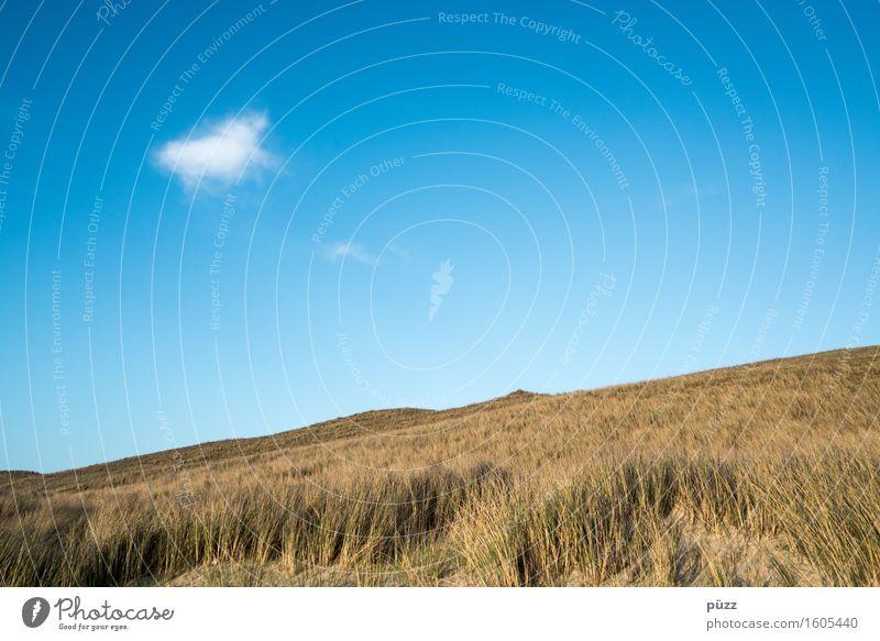 Single Himmel Natur Ferien & Urlaub & Reisen Pflanze blau weiß Meer Landschaft Einsamkeit Wolken Umwelt gelb Gras Küste Freiheit Horizont