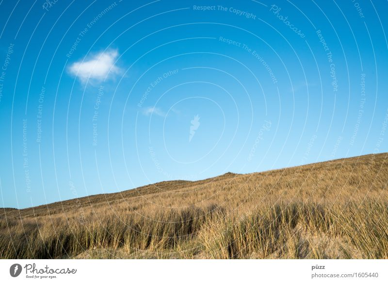 Single Umwelt Natur Landschaft Pflanze Urelemente Erde Luft Himmel Wolken Klima Wetter Schönes Wetter Gras Küste Meer blau gelb weiß Fernweh Freiheit Stranddüne