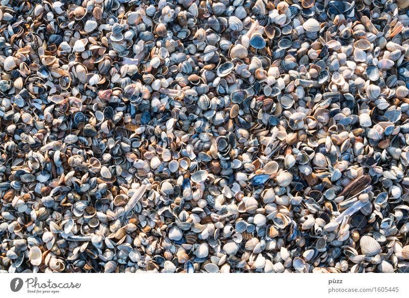 Überall nur Muscheln Ferien & Urlaub & Reisen Sommer Sommerurlaub Strand Meer Umwelt Natur Tier Urelemente Erde Sand Küste Nordsee Ostsee braun mehrfarbig weiß