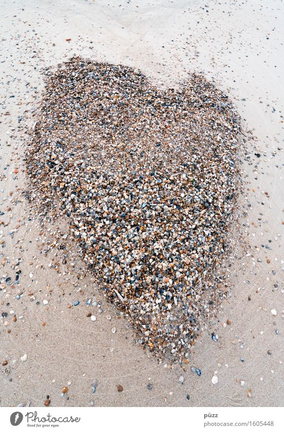 Muschelherz Ferien & Urlaub & Reisen Sommer Sommerurlaub Strand Umwelt Natur Tier Urelemente Erde Sand Küste Nordsee Zeichen Herz klein braun Liebe Verliebtheit