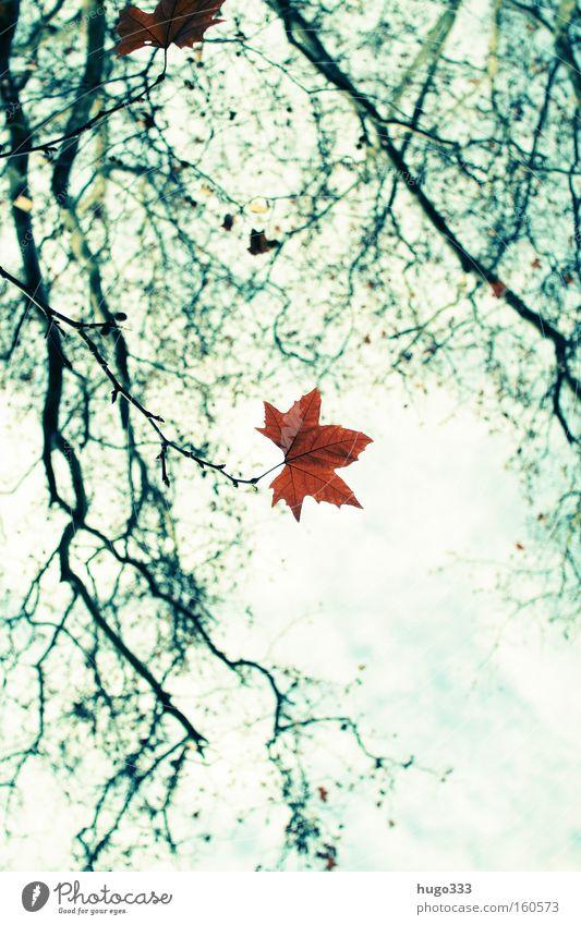 Herbstliches Natur Himmel grün blau Blatt Einsamkeit gelb leer Trauer Ende Ast Verzweiflung Abschied Zweig Herbstlaub