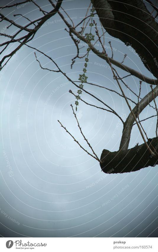 Sternchen im Geäst Schmuck Kette Baum Himmel Ast kahl grau Wolken trist hängen baumeln verlieren Erfolg Überfluß Fundsache