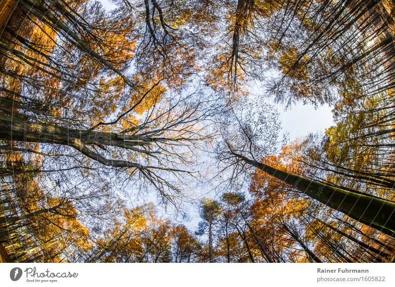 Der Blick zum Himmel Natur Pflanze Landschaft Wald wandern beobachten Schönes Wetter