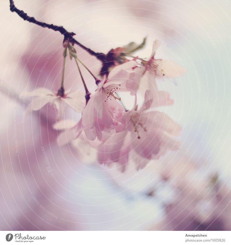 ::16-15:: Umwelt Natur Pflanze Frühling Sommer Klima Wetter Baum Blume Blüte Nutzpflanze Wildpflanze Garten Park ästhetisch Design Duft Spaziergang Hochzeit