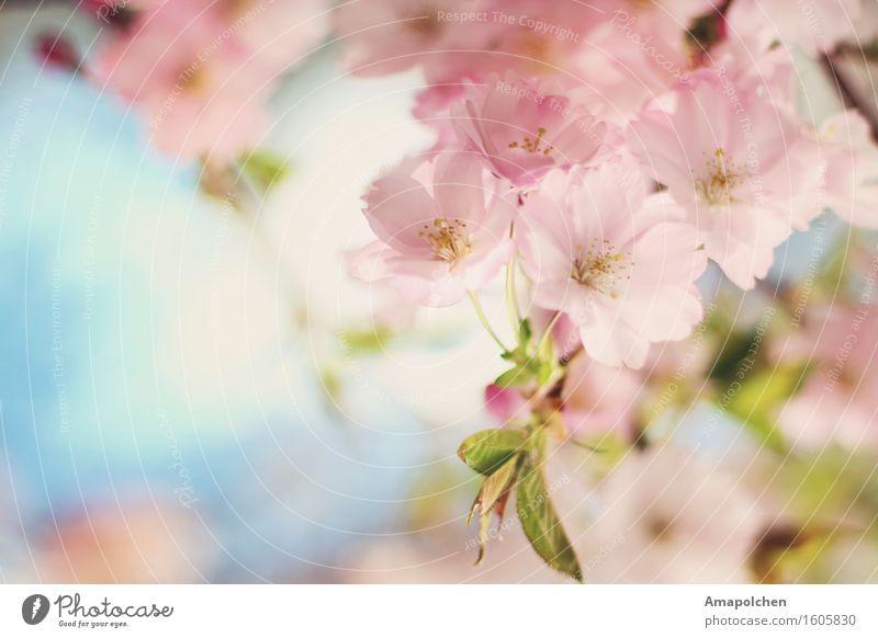 ::16-13:: Umwelt Natur Landschaft Pflanze Tier Himmel Frühling Sommer Klima Schönes Wetter Baum Blume Blüte Nutzpflanze Garten Park Glück Fröhlichkeit