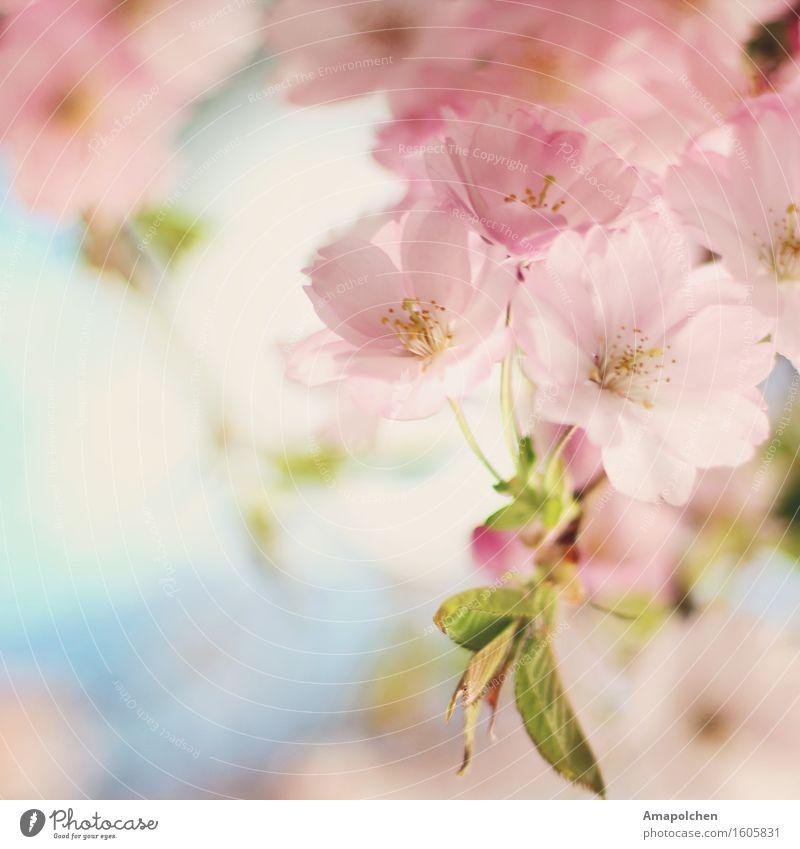 ::16-16:: Umwelt Natur Pflanze Himmel Frühling Sommer Klima Wetter Baum Blume Blatt Blüte Nutzpflanze Wildpflanze Garten Park Glück Fröhlichkeit Zufriedenheit