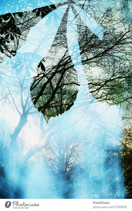 Wald Lifestyle sportlich Ferien & Urlaub & Reisen Tourismus Ausflug wandern Landwirtschaft Forstwirtschaft Umwelt Natur Himmel Sonnenlicht Herbst Pflanze Baum