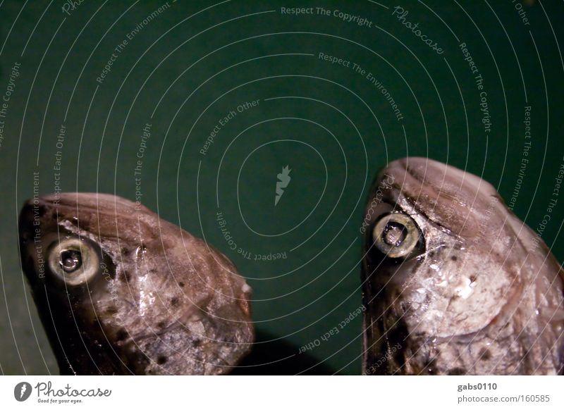 Brüder Auge Kopf Fisch gefroren bewegungslos Zwilling Fischauge Schuppen Forelle Kieme tiefgekühlt Fischkopf