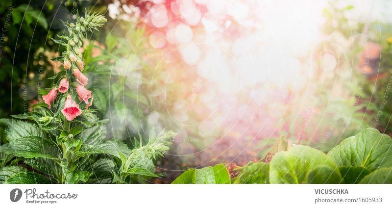 Schöner Garten mit Blumen und grünen Blätter Design Ferien & Urlaub & Reisen Sommer Natur Pflanze Sonnenlicht Frühling Schönes Wetter Gras Sträucher Blatt Blüte