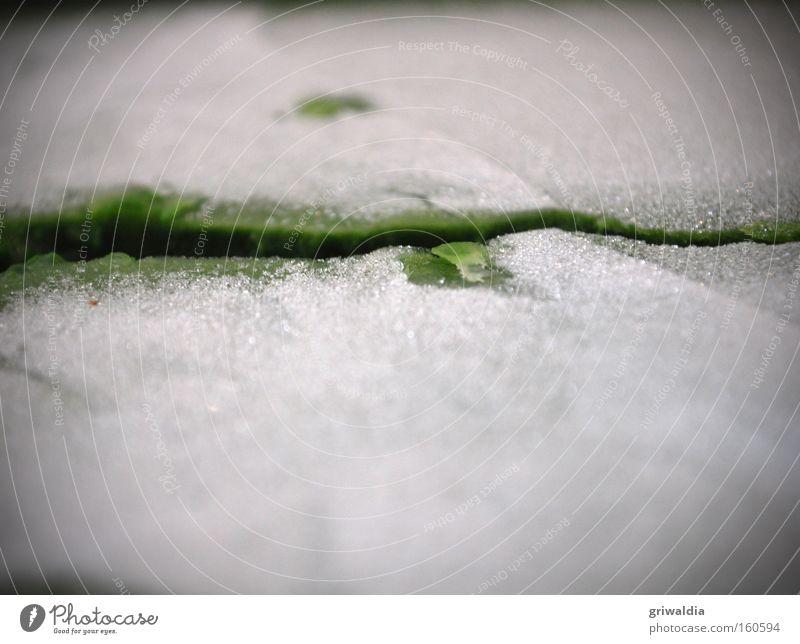 Gefrorenes*** grün Eis kalt Eiskristall weiß Spinat gefroren tauen kochen & garen Ernährung lecker Eisen Gemüse Appetit & Hunger Vitamin Küche Bruchlinie