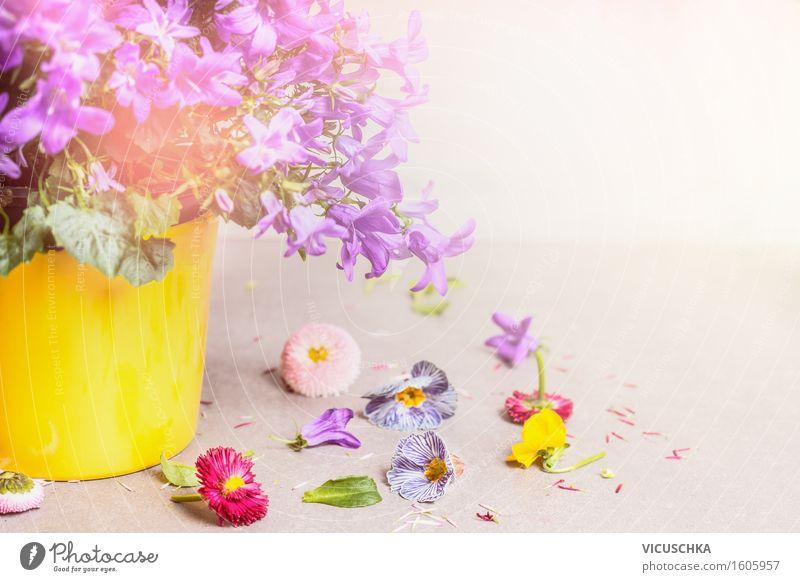 Blumentopf mit Glockenblumen Stil Design Leben Sommer Innenarchitektur Dekoration & Verzierung Tisch Natur Pflanze Blatt Blüte Blühend Duft hell