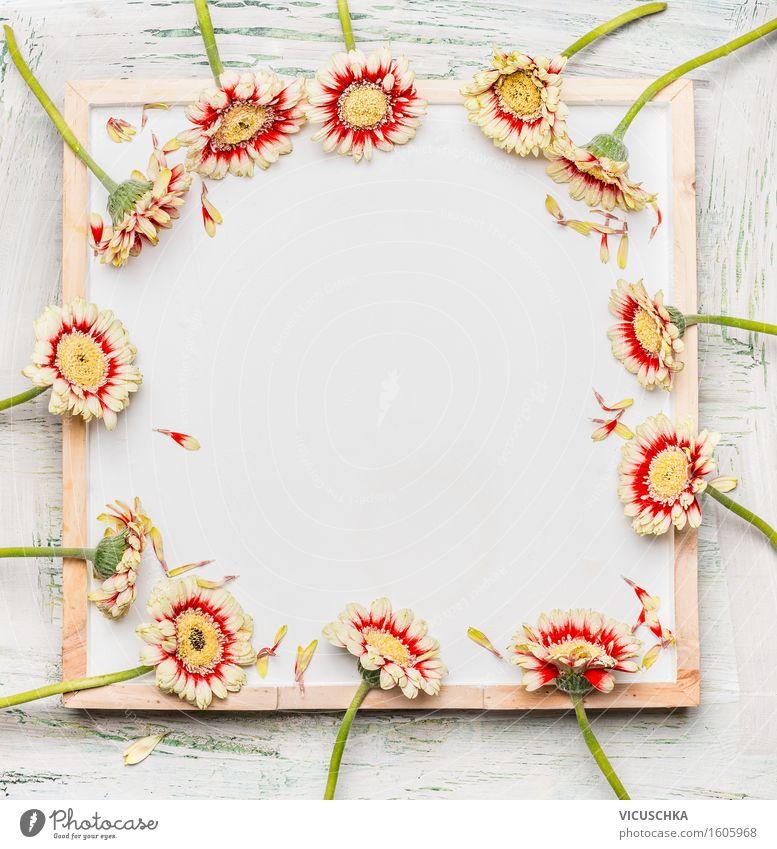 Gerbera Blumen auf weißer Tafel Natur Pflanze Blume Blatt Liebe Blüte Hintergrundbild Stil Feste & Feiern rosa Design Textfreiraum Dekoration & Verzierung Schilder & Markierungen Geburtstag leer