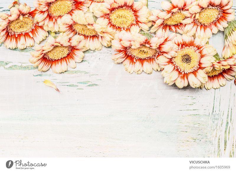 Schöne Gerbera Blumen Natur Pflanze Sommer Farbe Blume Blatt Liebe Blüte Stil Holz Feste & Feiern hell rosa Design Dekoration & Verzierung Geburtstag