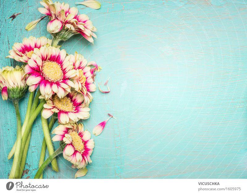 Schöne Blumen auf türkis Hintergrund . Pflanze Sommer Blume Blatt Liebe Blüte Stil Feste & Feiern Party rosa Design Häusliches Leben Dekoration & Verzierung Textfreiraum Geburtstag retro