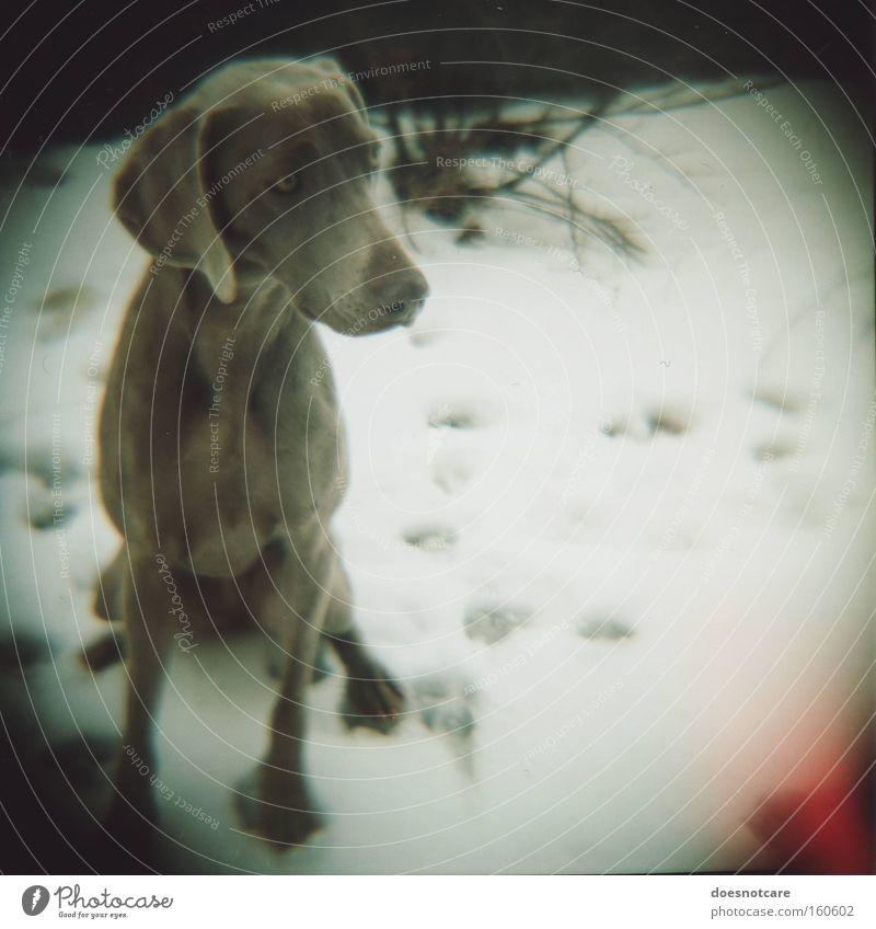 some days are darker than others. Hund weiß schön Winter Tier kalt Schnee grau sitzen niedlich Spuren analog Haustier Säugetier Pfote Vignettierung